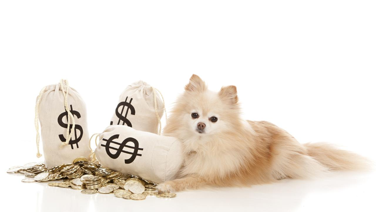 Lockyer Valley Regional Council is not considering suspending dog registration fees for the next financial year.