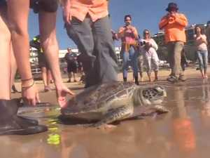 'Beary' special World Oceans Day for injured turtle