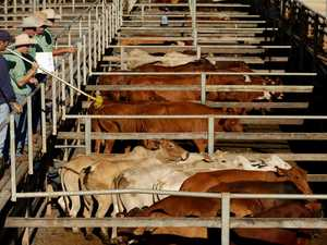 ALL-TIME HIGH: cattle price smashes saleyards record