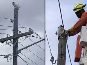 Cat lucky to be alive after daring climb