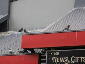 Bird population creates fowl mess, headache for businesses