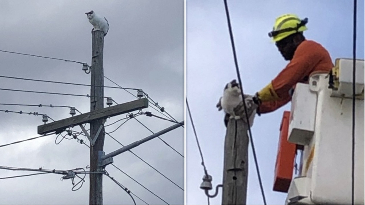 Frankie almost lost one of her nine lives when she climbed between live power lines to the top of a power pole, forcing an electricity shutdown to rescue her.