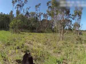 RIP Sunshine Coast police dog DJ