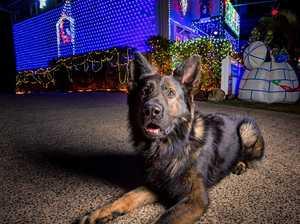 RIP police dog DJ