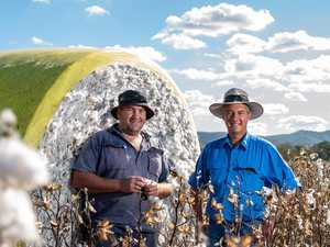Farmer defies critics with first cotton crop in 60+ years