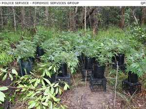 IN PHOTOS: Drug raid discovers 'significant' cannabis setup