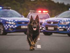 Farewell to a good boy: Brave police dog remembered