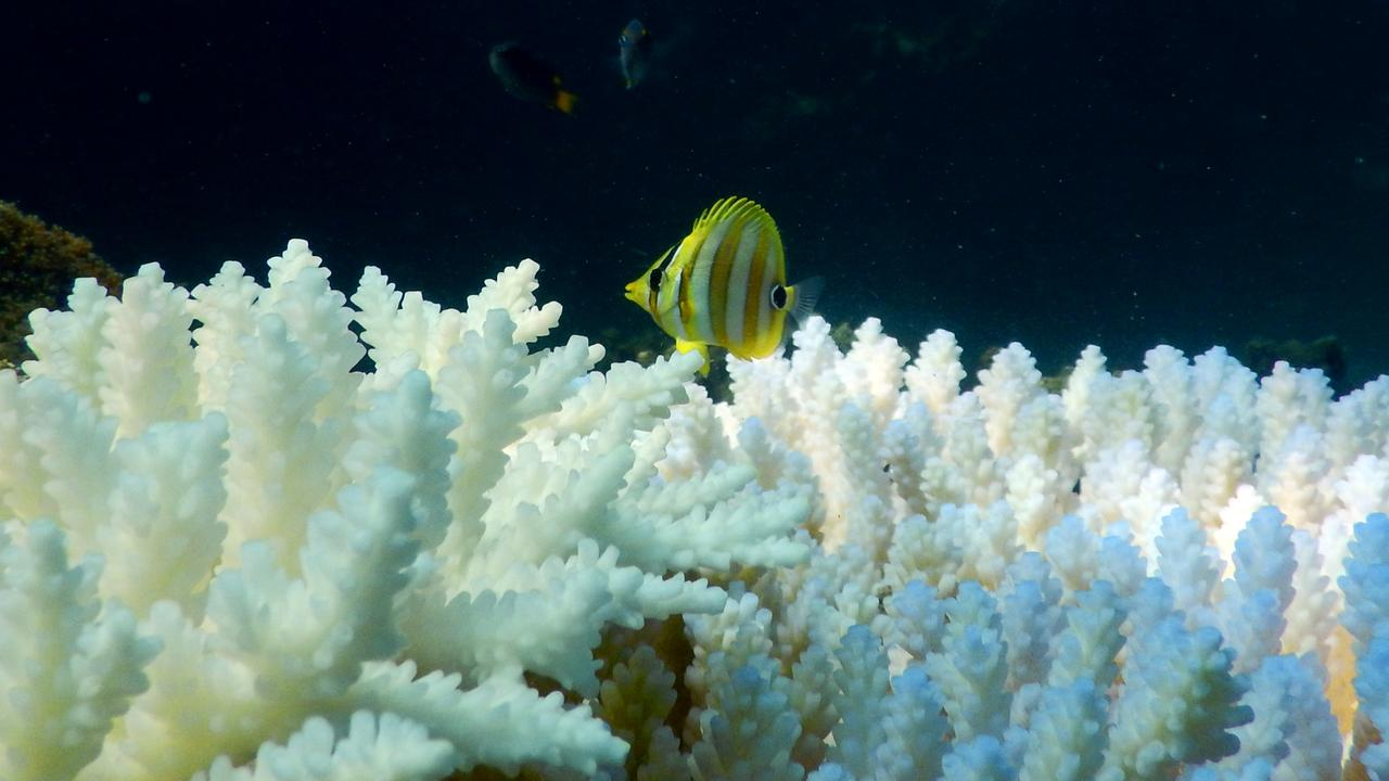 Photos show life returning to bleached corals off Magnetic Island.