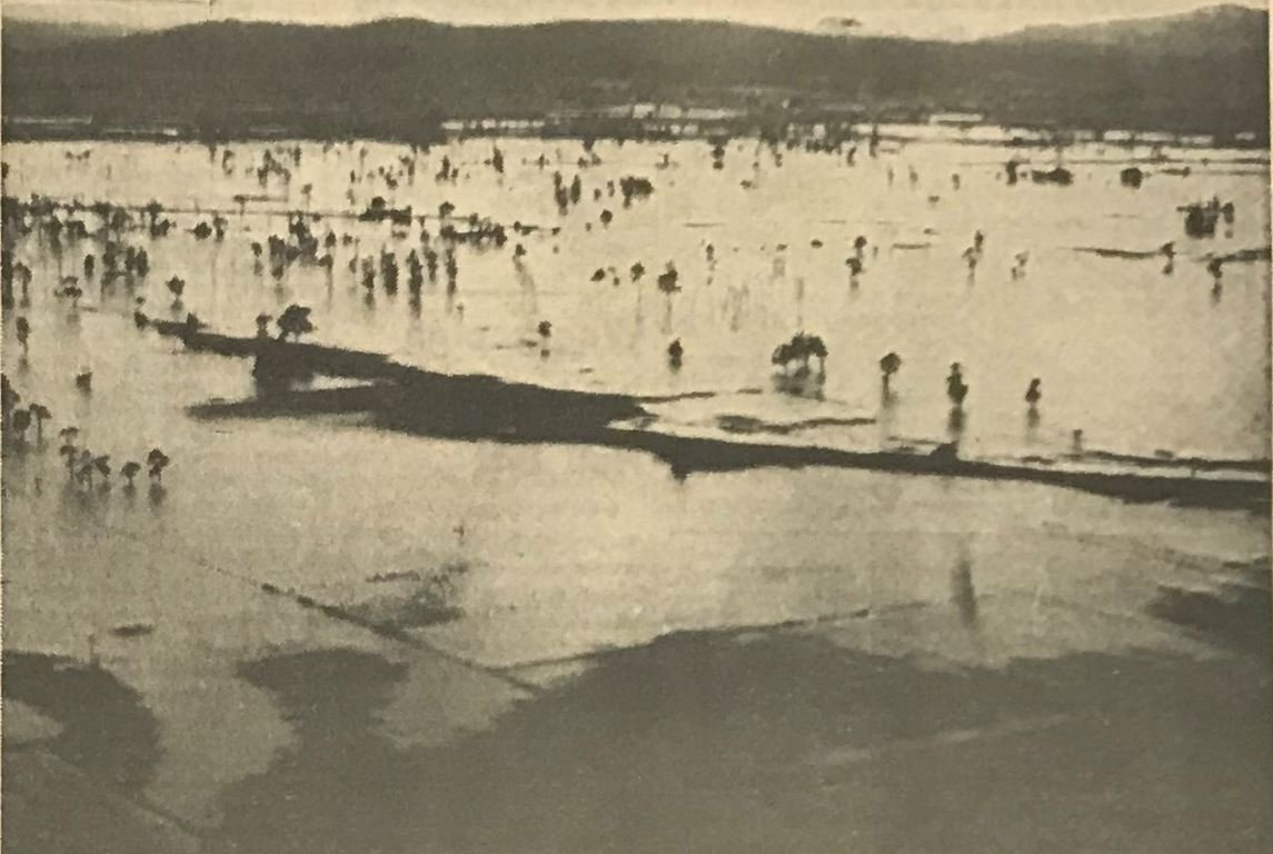 A typical flood scene on Woodford Island on the Lower Clarence, as published in The Daily Examiner on 15th of June, 1970.