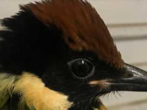 RARE SIGHTING: Driver rescues stunning bird