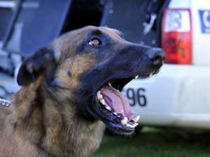 Man attacked by police dog in Burnett drug raids