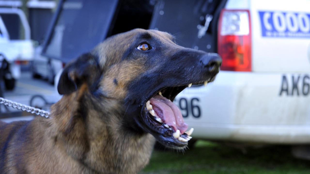 DOG CATCHES OFFENDER: Police carried out several drug raids in Mundubbera following community tip offs. Picture: File