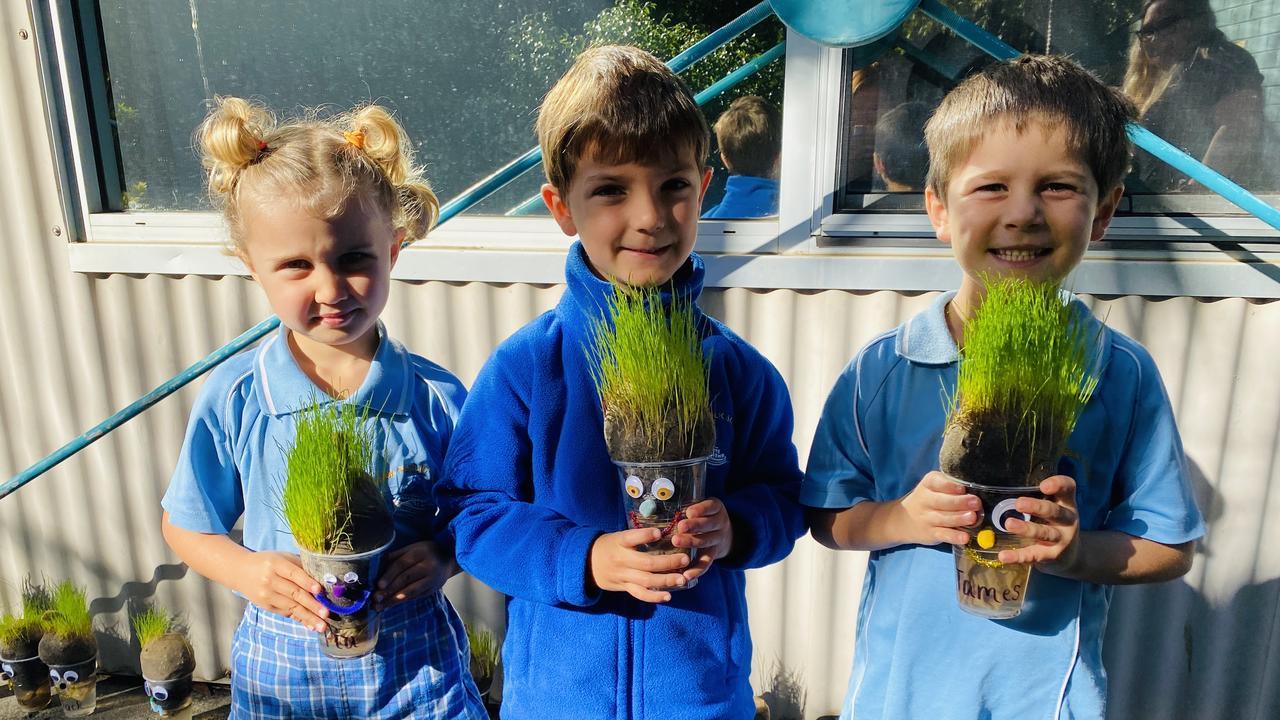 Yamba Public School Kindergarten growing their 'Grass Heads'