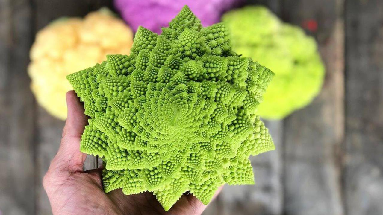 SunCoast Fresh is selling Romanesco broccoli to restaurants and cafes and in take-home boxes.