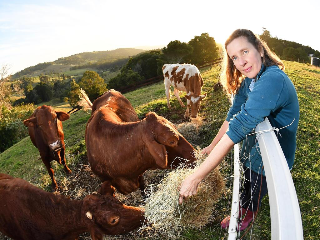 Julianne Watson, the partner of Anthony Walsgott, has to man the Save a Cow Foundation while he is incapacitated. Photo: Patrick Woods