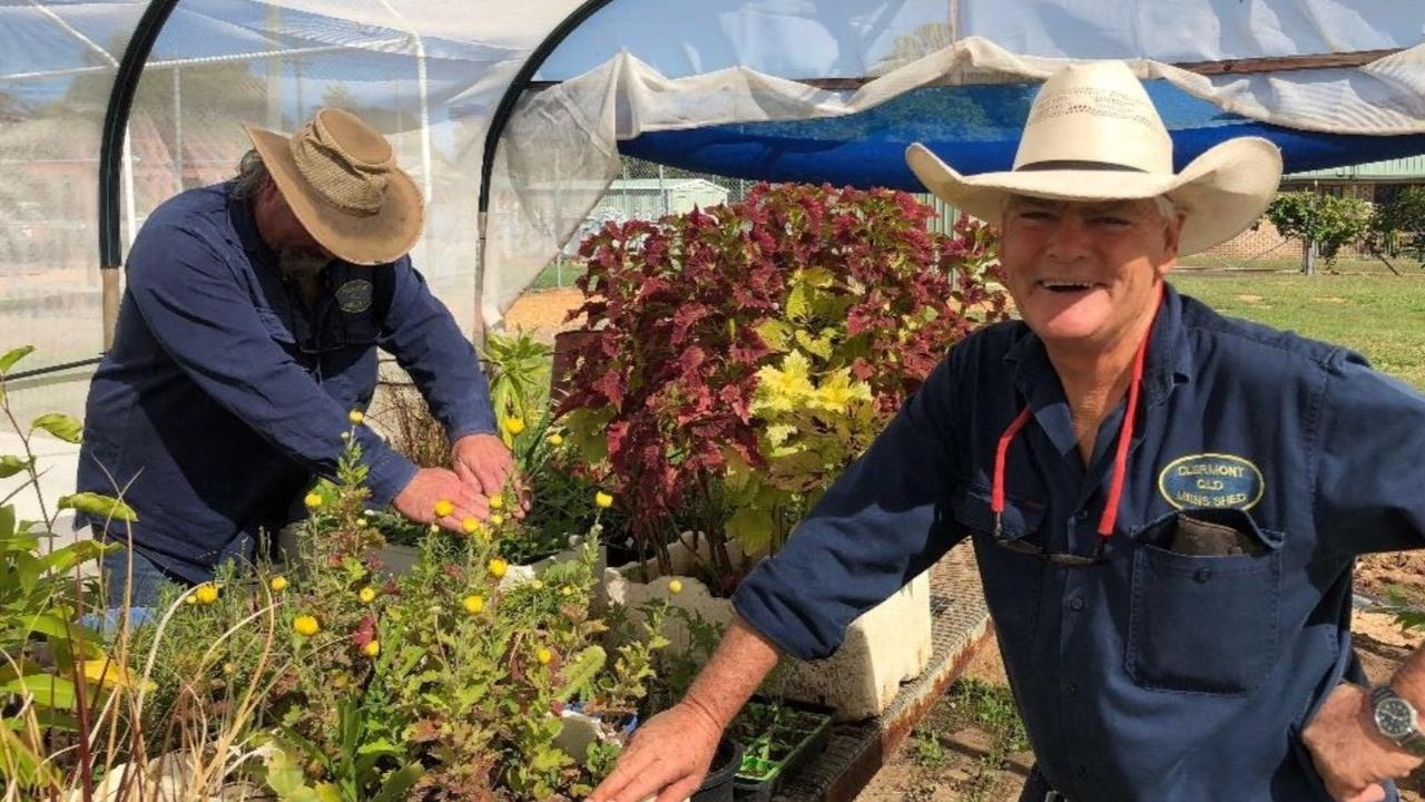 HEALTHY OUTLOOK: Clermont Men's Shed members cultivating plants to raise money at the local markets.