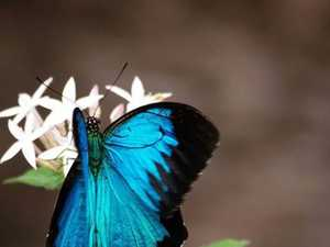 Beautiful butterfly captured in botanic gardens