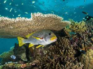 Government boosts reef's water quality monitoring