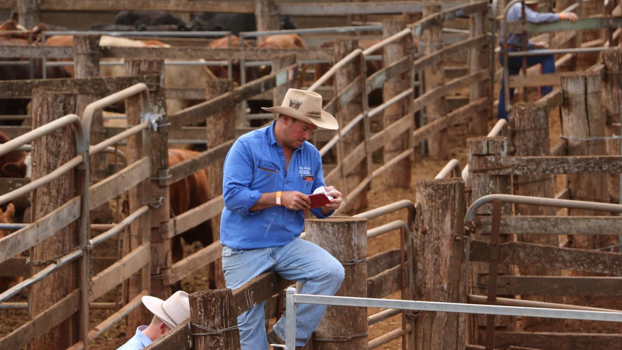 Shad Bailey, the director of Colin & Say P/L Glenn Innes NSW at the Coolabunia saleyards. (Photo: Aussie Land & Livestock)