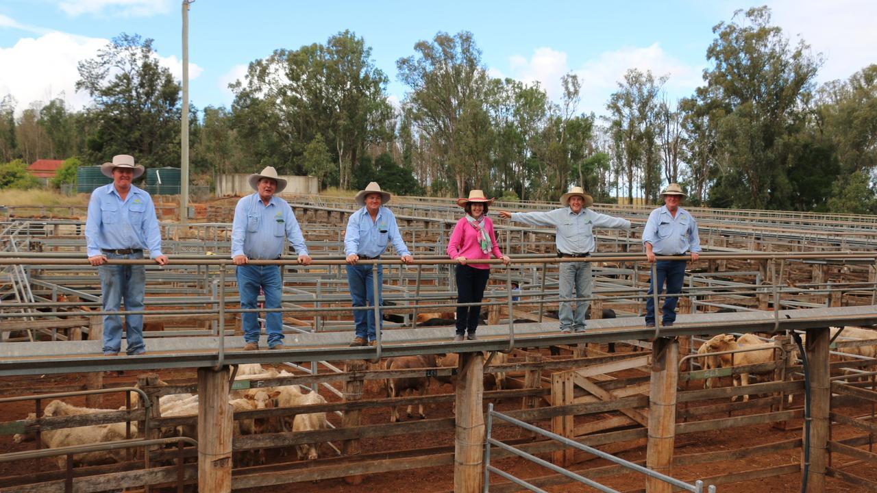 The Aussie Land & Livestock sales team of Corey Evans, Chris Crouch, Midge Thompson, Cr Kathy Duff, James Bredhauer and Bill Steffenson, all social distancing at the Coolabunia saleyards. (Photo: Aussie Land & Livestock)