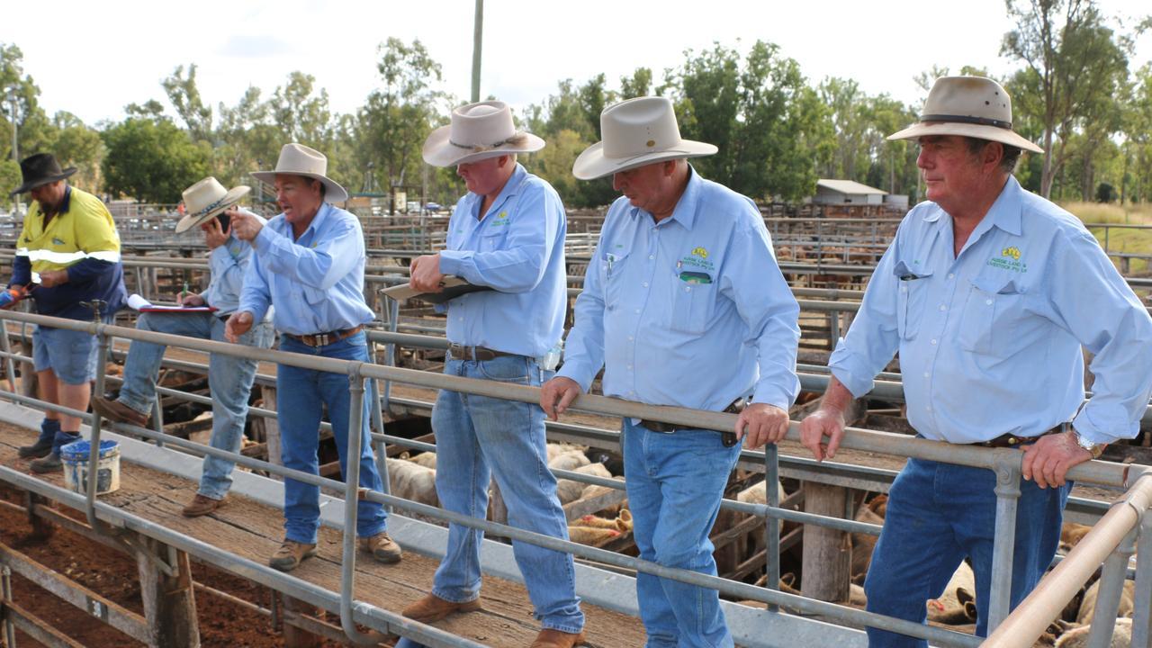 The Aussie Land & Livestock sales team of James Bredhauer, Midge Thompson, Corey Evans, Chris Crouch and Bill Steffenson at the Coolabunia saleyards. (Photo: Aussie Land & Livestock)