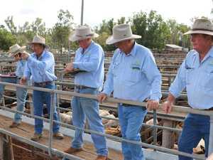 PHOTOS: Cracker cattle sales at Coolabunia, Murgon