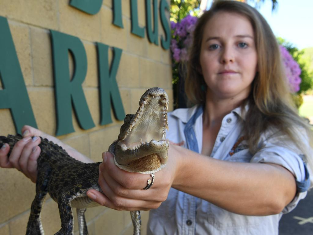 Crocodile keeper Shannon Jones with a young croc similar to the ones stolen last month from Crocodylus Park. Picture: Katrina Bridgeford