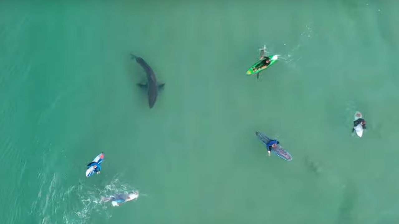 Chilling drone footage caught a great white shark stalking six surfers who had no idea it was metres away until it was almost too late.