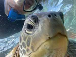 'Insane' footage of turtles at Old Woman Island