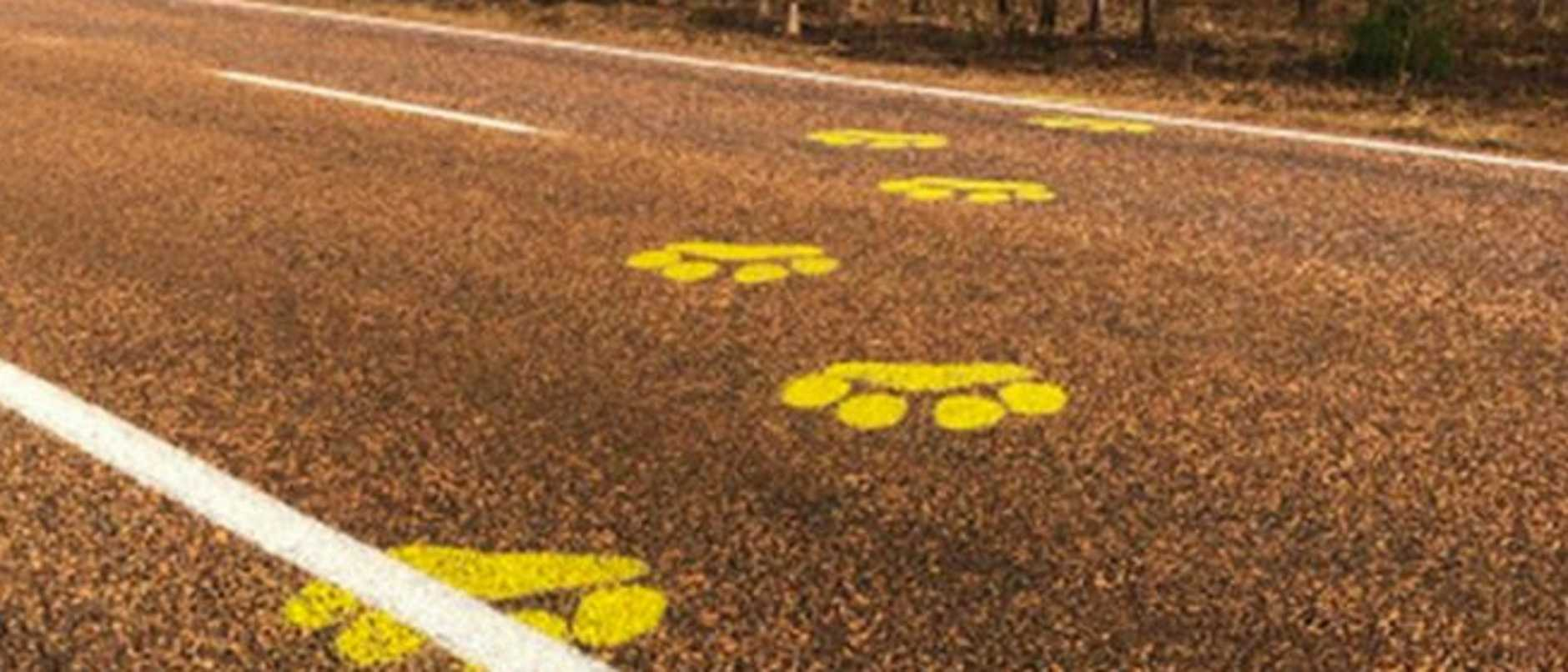 The plot has thickened in a mystery case of painted animal tracks on a country road after the transport department said they weren't involved.