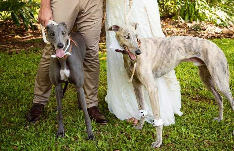 For pooch-loving couple McKenzie Sirmon and Alex Bothe, their dogs simply had to be part of their special day.