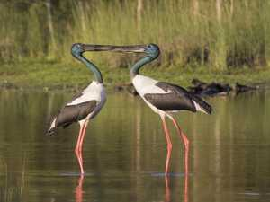 Birdwatchers in Byron Wetlands need new access tags