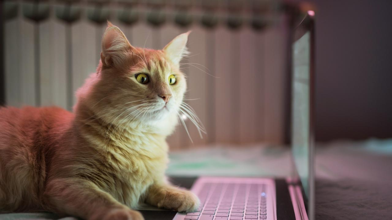Cat working on laptop. Pets and money generic