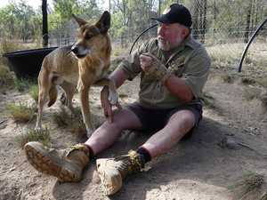 Gunfire sends Dingo Sanctuary owner to hospital