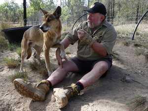 Gunfire sends Dingo Sanctuary owner to hospital