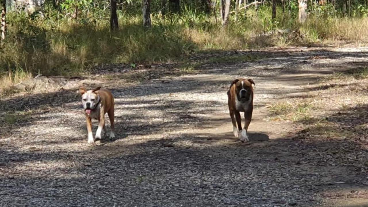 DOGS: Management of Rocky Creek Scout Camp at Landsborough are seeking public assistance after wildlife monitoring cameras that caught rogue dogs harassing kangaroos, and people trespassing, were stolen.