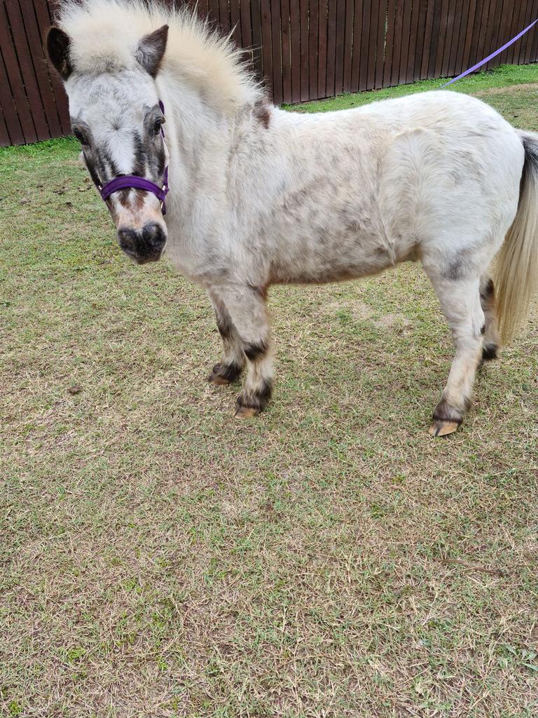 Kim-Maree Rowan's pet horse Bobo. Picture: Kim-Maree Rowan