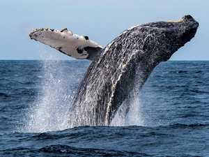 'Traumatic': Whale hits tourist boat