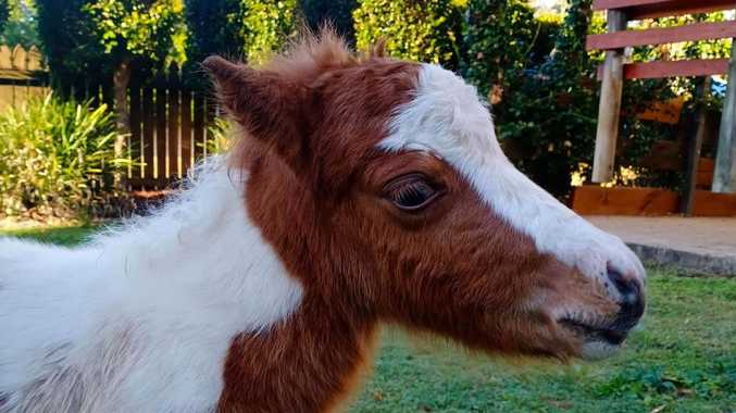 Ponies mauled to death in horrific dog attack