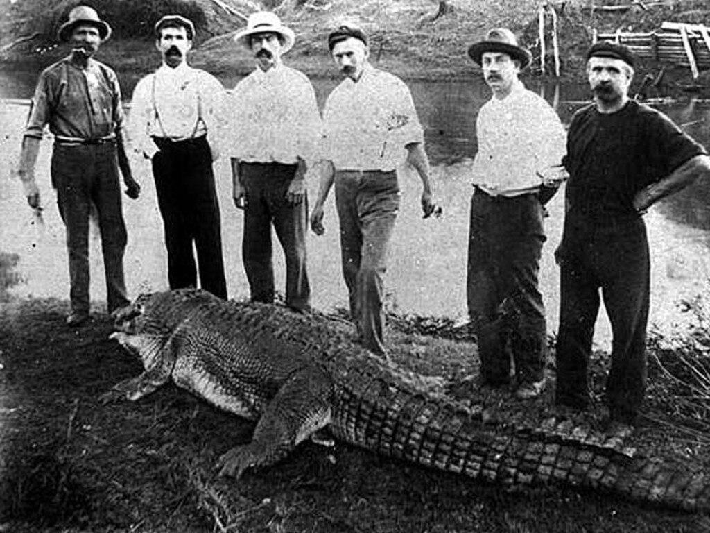 A crocodile was caught in the Logan River near Brisbane in 1905.