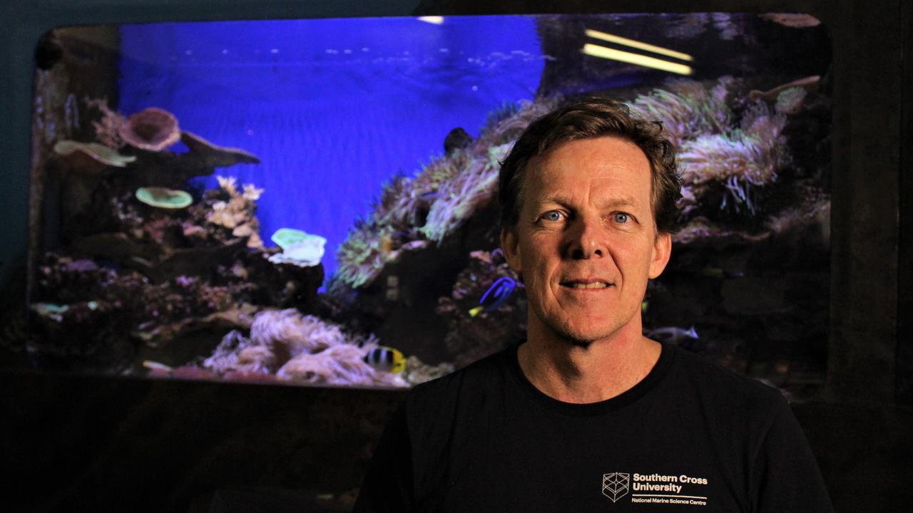 SCU community outreach and education program manager Stephan Soule at the Solitary Islands Aquarium which has reopened after a temporary closure due to coronavirus. Photo: Tim Jarrett