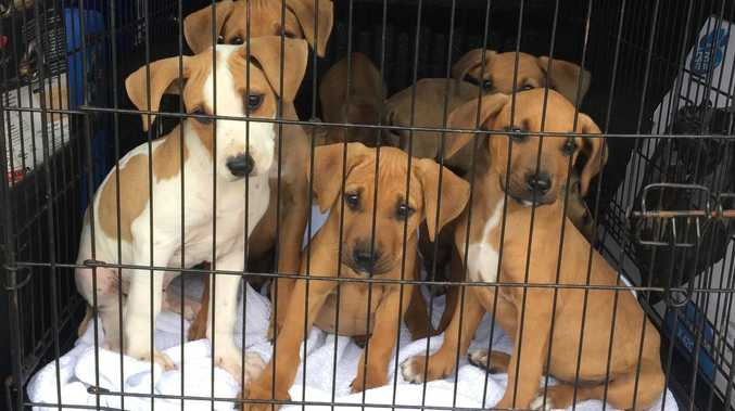 Heartless owners dump seven puppies near river
