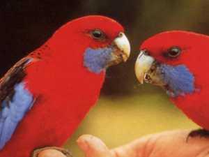 Virus is decimating bird population