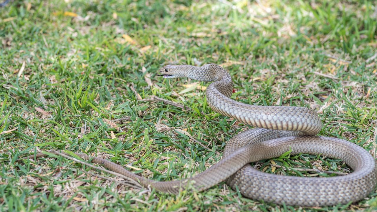 SNAKE BITE: A girl was rushed to hospital with a suspected snake bite.