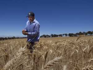 Grain industry is critical for regional jobs