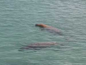 RARE SIGHT: Whole families of elusive sea creatures spotted