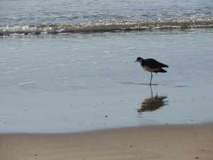 LIFE'S A BEACH: Nielsen Park Bargara on Saturday