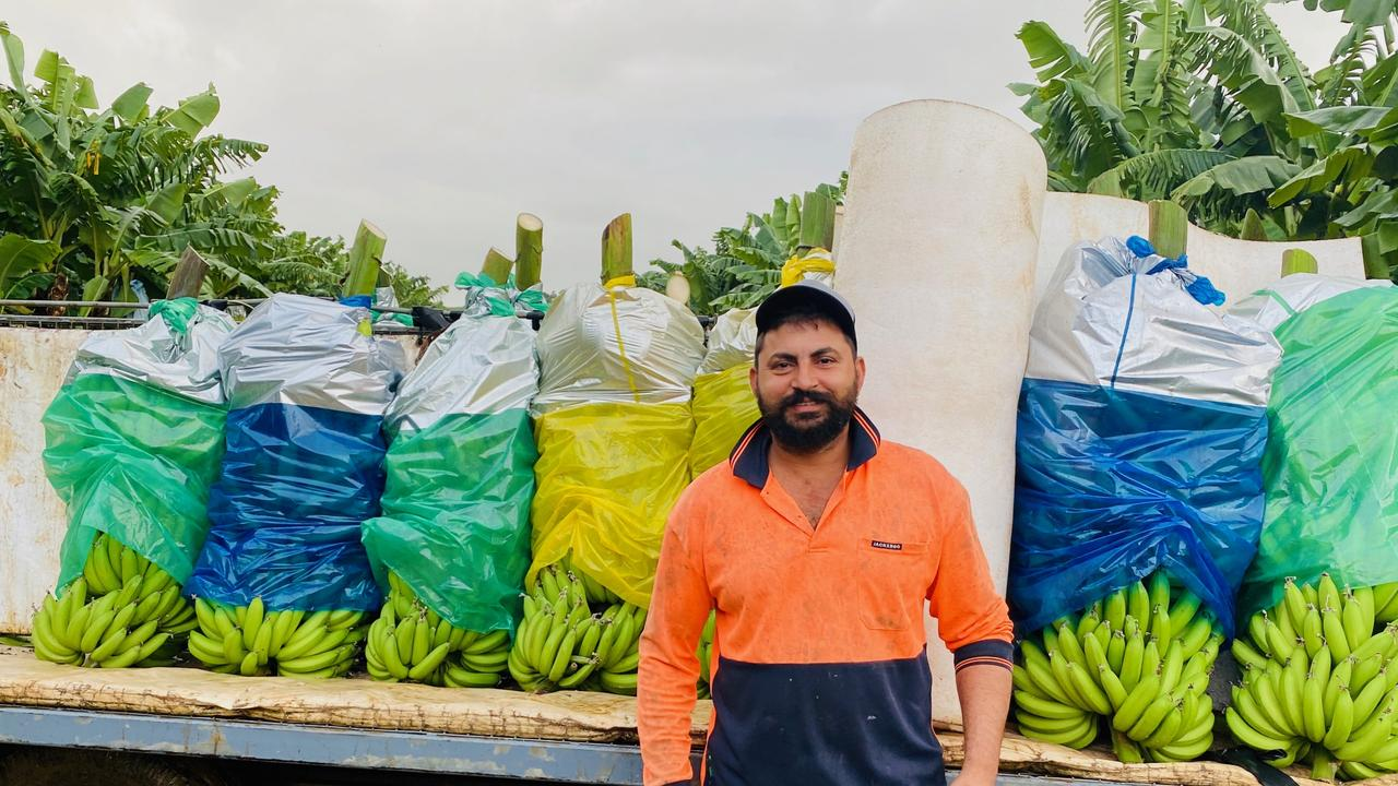 FNQ banana farmer Sukhwinder Singh Maan amassed over 35 million views on TikTok showing off his banana cutting technique.