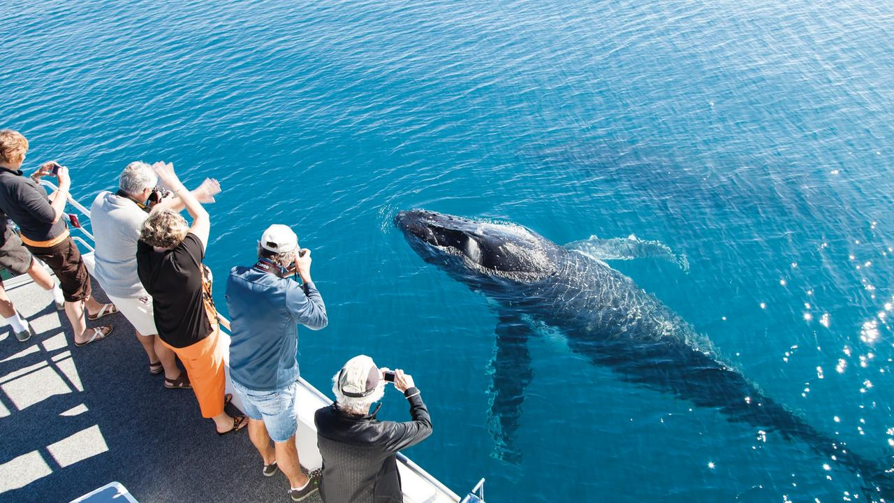 Whale watching is one of the many tourism drawcards of the Fraser Coast. Photo credit: Matthew Taylor/Tourism & Events Queensland