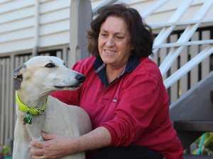 Champion greyhound winning hearts in retirement